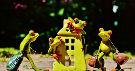 frogs-1408448_640