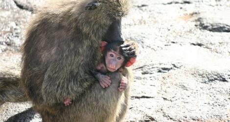 monkey-67029_640