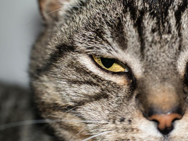 cat-762658_640