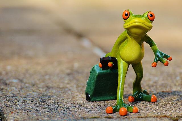 frog-897418_640